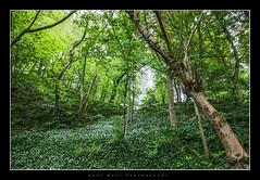 Brig o' Balgownie (Gary Watt) Tags: bridge trees water river scotland woods aberdeen bridgeofdon brigobalgownie