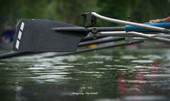 CA-5_16-1070 (Chris Worrall) Tags: yellow chrisworrall chris worrall cambridge rowing 99s club spring regatta water river sport splash race competition competitor dramatic exciting 2016 theenglishcraftsman