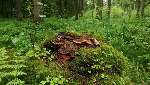 Im Wald zwischen Hopfensee und Eschach
