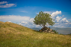The Spot (Ali Sabbagh) Tags: light world travel eos7d canon background wallpaper day summer green beauty landscape nature tree قثث