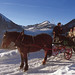 Fancy a sleigh ride!