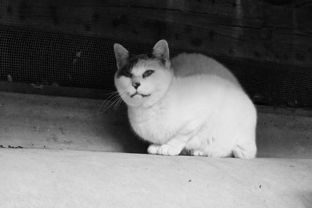 Today's Cat@2011-11-27