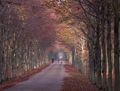 Walking the dog in the Autumn cathedral (Wilma1962*) Tags: autumn trees people dog fall forest bomen woods herfst hond bos mensen najaar wandelaars nieuwrande mygearandme mygearandmepremium mygearandmebronze mygearandmesilver mygearandmegold mygearandmeplatinum mygearandmediamond
