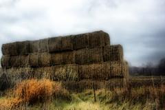 Hay Hay (gabi-h) Tags: november autumn trees ontario fall grass fence farm hay bales princeedwardcounty gabih