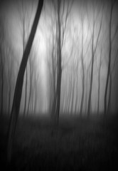 inclinazione naturale (* onda *) Tags: mist cold thinking icm propensity intentionalcameramovement