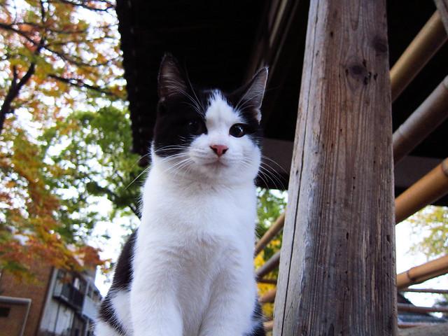 Today's Cat@2011-12-04