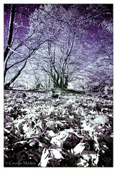 Autumnal Infrared photo /  . (George-Michos-GR) Tags: landscape george nikon greece infrared hoya kalambaka r72 trikala michos  auyumn d3s        gayros