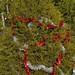 360_Trees_2011_056