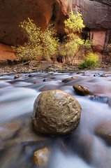 Between a Rock and a Hard Place (Joshua Cripps) Tags: red orange water yellow fallcolor boulder zionnationalpark virginriver thenarrows tokina1224mm joshuacripps indurotripod nikond7000 acratechballhead