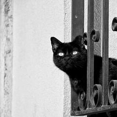 Vigilante (Vero_85) Tags: blackandwhite blancoynegro window cat ventana gato canoneos7d canon7d miradafavorita