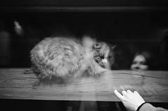 29930008 (qwz) Tags: girl cat reflections hand moscow www cle  suhanovo