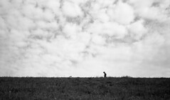 Running (Snap Shooter jp) Tags: street leica sky blackandwhite bw cloud film monochrome japan tokyo kodak snapshot stock bank rangefinder snap tmax400 runner blackdiamond arakawa xtol ei200 iiic kitasenjyu voigtlandercolorskopar28mmf35 colorskopar28mmf35 flickrestrellas mygearandme