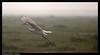 Time 2 move on!!! (Sanjib Behera) Tags: bird flying nikon egret orissa flyingbird flickraward flyingegret nikonflickraward sigma120400 mangalajodi