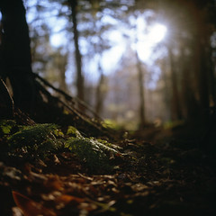 (patrickjoust) Tags: park trees light usa sun sunlight fern color 120 6x6 tlr film analog rolleiflex zeiss america forest square lens gold golden us reflex woods focus fuji dof floor mechanical state bokeh pennsylvania united north patrick twin ground slide glen pa chrome medium format states shallow manual 80 joust fujichrome e6 f28 planar estados ricketts 80mm reversal unidos 28f franke 400x autaut heidecke patrickjoust