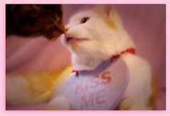 Kiss Me... (KrazyBoutCats) Tags: cats pets cute love chat sweet kittens felines valentimesday animalscopernicus loiskissme