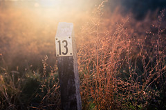 Friday (Standard Deluxe) Tags: sunset sunlight 50mm evening meadow thirteen trailmarker 50l canonef50mmf12lusm