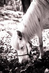 Dreaming (Anie*) Tags: bw horse caballo bn dreaming soando