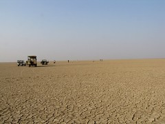 Looking for Hoopoe Lark (Shreeram Ghaisas) Tags: birds kutch dasada rann littlerann gujarath