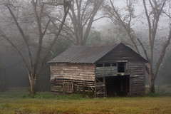 Morning Fog (Marvin Foran Photography) Tags: fog georgia barns southgeorgia ruralscenes ruralfarms pecantree ruralgeorgia rurallandscapes gradycounty cairoga marvinforanphotography