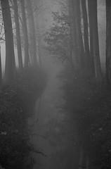 immersi nella nebbia (mat56.) Tags: trees white black nature monochrome misty fog alberi monocromo landscapes milano natura campagna nebbia paesaggi bianco lombardia nero pianura padana sancolombanoallambro mat56