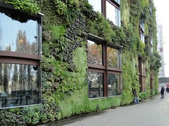 Quai Branly Museum (Le muse du quai Branly), Green walls by Patrick Blanc      (   ) (Native Grasses) Tags: paris france greenwalls  patrickblanc quaibranlymuseum  lemuseduquaibranly     verticaldarden