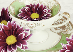 Tea Petals (KimFearheiley) Tags: floral february teacup kimfearheileyphotography