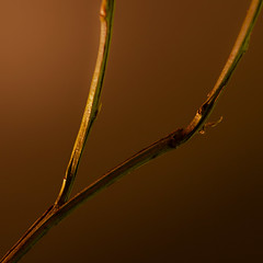 Ypsilon (96dpi) Tags: orange macro nature yellow closeup square warm branch natur gelb quadrat zweig gettygermanyq4