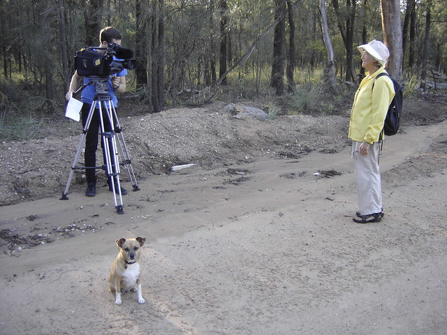 June Norman (Paddington Bear), Bindi and Channel 9 Win Tv News Media