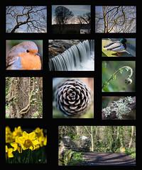 Silverdale Collage (Sue M2009) Tags: sky ny fern tree robin collage duck cone bark mallard lichen daffodils silverburn silverdaleglen bayr millenniumway niallbenvie deconstructedlandscape skeddanpine