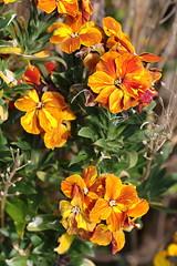 Flower 2 20160507 (Steve TB) Tags: wild flower canon broadstairs eos7dmarkii