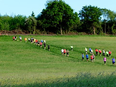 #82 of 116 in 2016 - Illustrate a nursery rhyme (amy's antics Will catch up with commenting ASAP) Tags: field evening runners nurseryrhyme