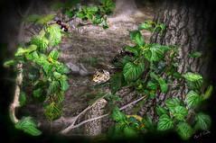 Bonus Squirrel (Chris C. Crowley) Tags: park trees nature animals forest woods squirrels wildlife vignette reedcanalpark southdaytonafl bonussquirrel