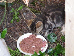 First proper  look at the new litter (rospix+) Tags: uk cats cute animals wales cat kitten feeding outdoor tabby may kittens litter tabbycat 2016 rospix