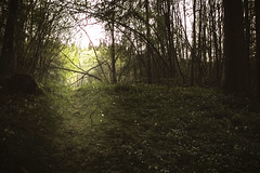 My way (anek07) Tags: trees sunlight white tree green nature way spring bush nikon sweden path natur sverige anemones stig trd springtime vr rayoflight vrmland grn myway buske solstrlar annaekman
