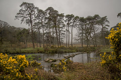 Stepping Stones (Stuart.67) Tags: trees england mist water river nikon stones devon stepping moor dartmoor d800 gorse naturethroughthelens
