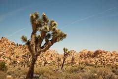 IMG_5142 (Lastexit) Tags: california desert joshuatree yuccavalley