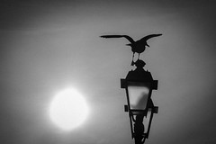 on the laterne (baker070) Tags: italy bird silhouette canon trieste friuliveneziagiulia ef24105mm canon6d