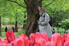 IMG_3031 (seustace2003) Tags: holland nederland an tulip bas pays tulipa niederlande keukenhof tulp tulipan paesi bassi tiilip sitr