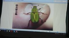 DSC07506 (yongheecs永和社大生態保育社) Tags: 林場