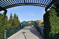 UCI_Palo Verde Bridge (wgnagel_uci) Tags: california bridge college campus university orangecounty irvine uci irvine universityofcalifornia