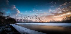 fly to the sun (klausi1983) Tags: winter wintertime canon tokina 1116 sun sunset clouds sky birds colour