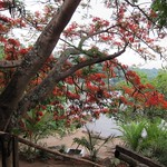 "Flame Tree <a style=""margin-left:10px; font-size:0.8em;"" href=""http://www.flickr.com/photos/14315427@N00/6417841147/"" target=""_blank"">@flickr</a>"