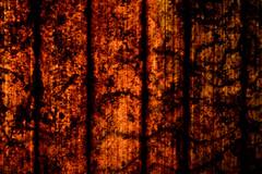 Leaf texture (ggallice) Tags: costa rain station rio america forest mesoamerica la leaf nikon rainforest central selva rica bosque jungle estacion backlit biological ots heredia sarapiqui centroamerica oet biologica d7000