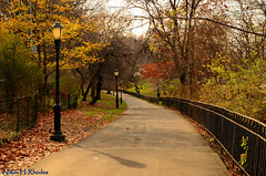 Autumn Sunlit Pathway In Riverside Park NYC (nrhodesphotos(the_eye_of_the_moment)) Tags: nyc autumn trees shadow green leaves metal fence season gate colorful branches perspective rail walkway lamps limbs sunlit soe pathway plantlife riversidepark nrhodesphotosyahoocom wwwflickrcomphotostheeyeofthemoment dsc4578nhr