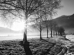 Morgennebel B&W (mikiitaly) Tags: nebel sw supershot spiritofphotography saariysqualitypictures bestcapturesaoi sailsevenseas elementsorganizer waldwiesenbäumerebenschneeusw