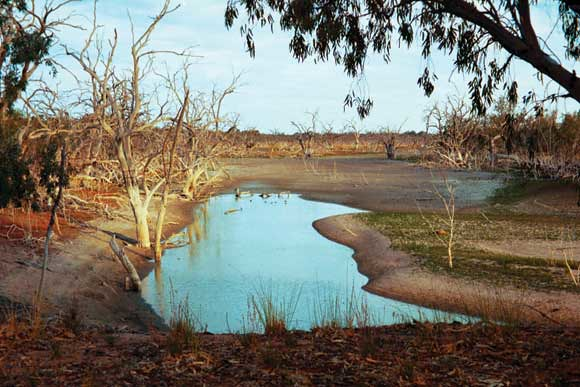 Murray Darling River Basin Problems The Murray Darling Basin