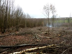 """Cut Coppice & Oak Standards • <a style=""""font-size:0.8em;"""" href=""""http://www.flickr.com/photos/61957374@N08/6498849835/"""" target=""""_blank"""">View on Flickr</a>"""