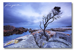 Binalong Bay Tree - Tasmania ([ Kane ]) Tags: ocean red sky storm tree water st clouds rocks australia tasmania helens kane tasie bayoffires gledhill sthelenstasmania canon5dmkii kanegledhillphotography