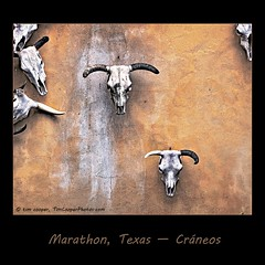 Craneos - skulls haning on the wall. Marathon, Texas. (tim, TimCooperPhotos.com) Tags: orange brown southwest skull us texas marathon bones northamerica westtexas flicker bigbend timcooper