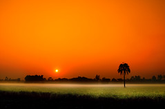 The north wind and the sun (Shutterfreak ) Tags: trees winter sun cold field silhouette fog sunrise landscape wind horizon crops grassland bangladesh fable aesop inkiad gettyimagesbangladeshq12012